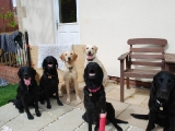L_R Archie, Stanley, Melvin, Sam, Molly, Charlie