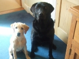 Amber with Barney (4mths old)