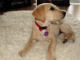 Summer (lilac collar) very cute puppy!