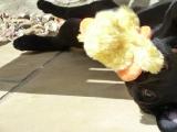 Tess loves her duck!