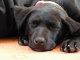 Sleepy girl Tess