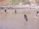goose-charlie-padge-colt-pepper-max-beach01