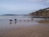 line-up-beach