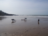 padge-pepper-trixie-charlie-max-colt-beach