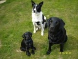 Maxie and Charlie with a baby Molly