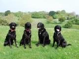 The All Black Gang!