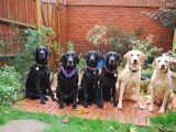L-R Stanley, Holly, Maggie, Molly, Melvin, Bunty (Molly with five of her puppies)