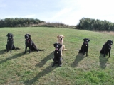 Stanley, Molly, Melvin, Archie, Charlie and Maggie at the front