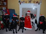 Katherine with her Christmas Dogs!