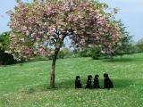 under the blossom tree!