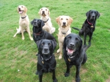 Ben, Sam, Molly, Stanley, Melvin, Archie and Charlie