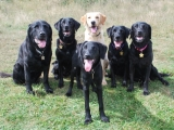 L-R - Charlie, Stanley, Melvin, Archie, Molly and Maggie at the front