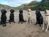 Archie, Stanley, Molly, Melvin, Charlie, Bunty