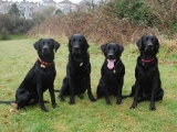 Stanley,  Charlie, Archie and Molly