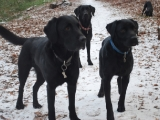 Charlie, Archie and Molly