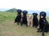 Molly, Stanley, Melvin, Archie and Charlie