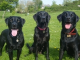 Archie, Molly and Stanley