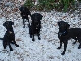The Gang on a snowy day