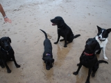 Archie, Stanley, Charlie, Max and Molly