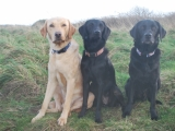 Melvin, Maggie and Stanley - Siblings!