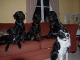 five-doggies-the-gang
