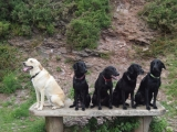 Milo, Maggie, Scrumpy, Molly and Maverick (2013)