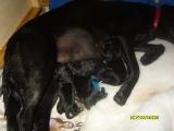 newborn puppies