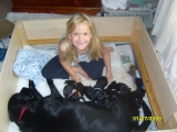 Katherine helping with the puppies