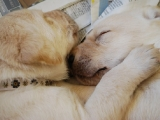 aww now that is puppy love!