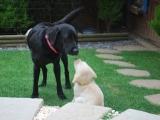 Rufus with Mummy