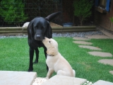 I love you Mummy (Rufus)