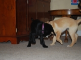 Maggie and Poppy playing