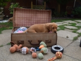 Miss Lilac just checking what has been packed!