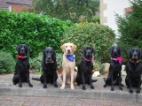 the gang - Stanley, Charlie, Melvin, Molly, Maggie and Archie
