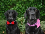 Molly with her pretty flower on her hearts collar and her son Stanley (on the left)