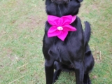 Maggie with a very cute flower on her collar.