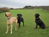 Melvin, Molly and Maggie