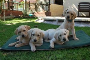 puppies 2012.1