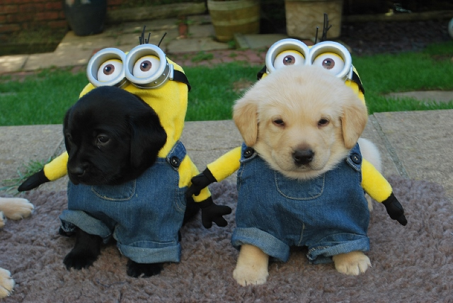 maggie minions black and yellow (640x428)
